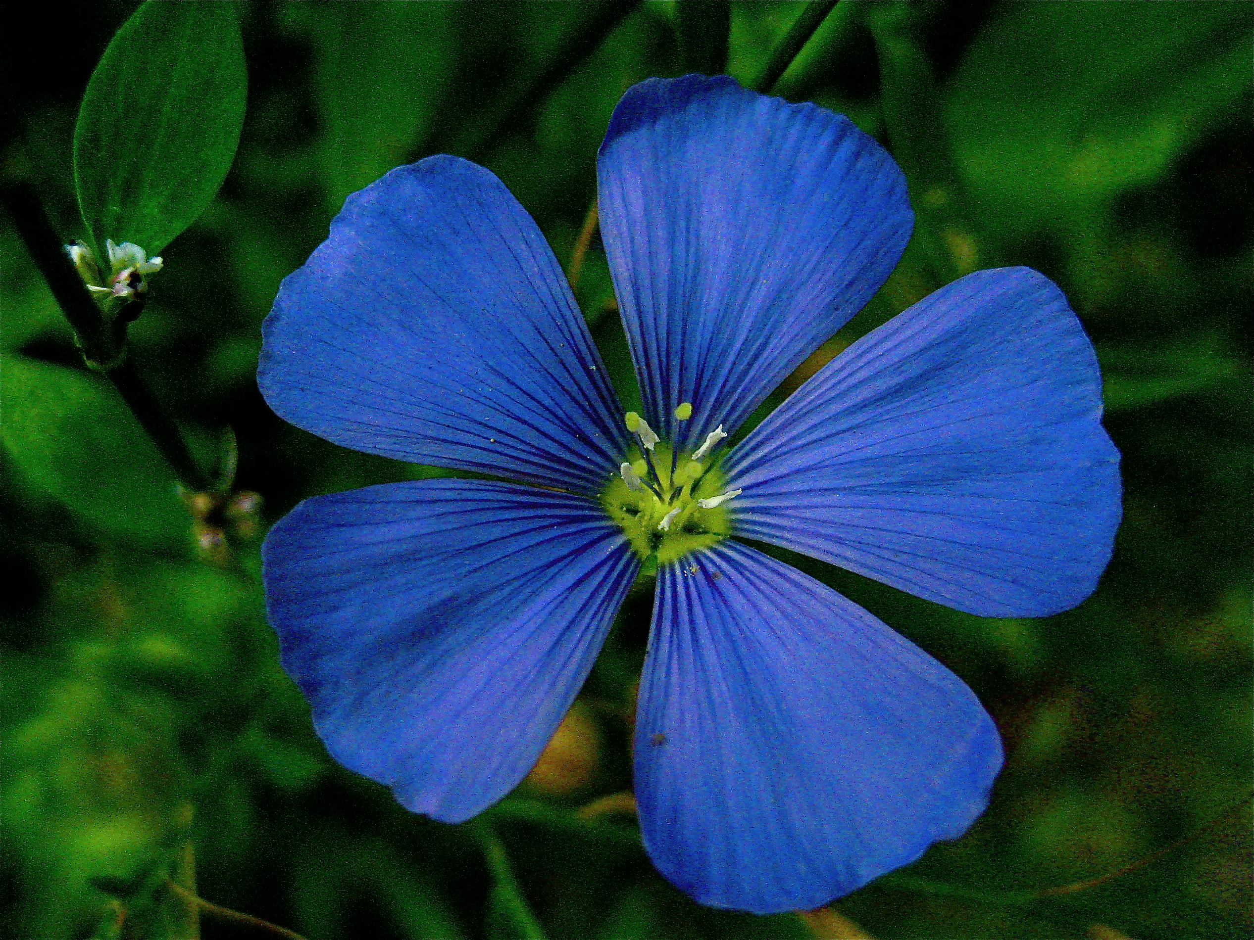 Dark Blue Flower Names