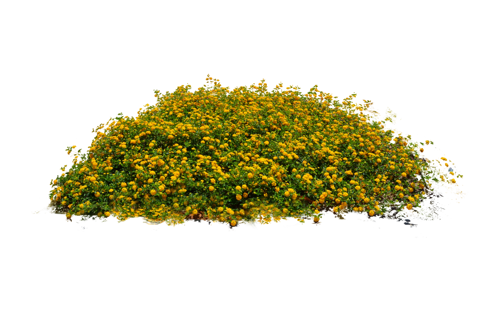 7 Free Png Photoshop Shrubs Images - Shrub Texture ...