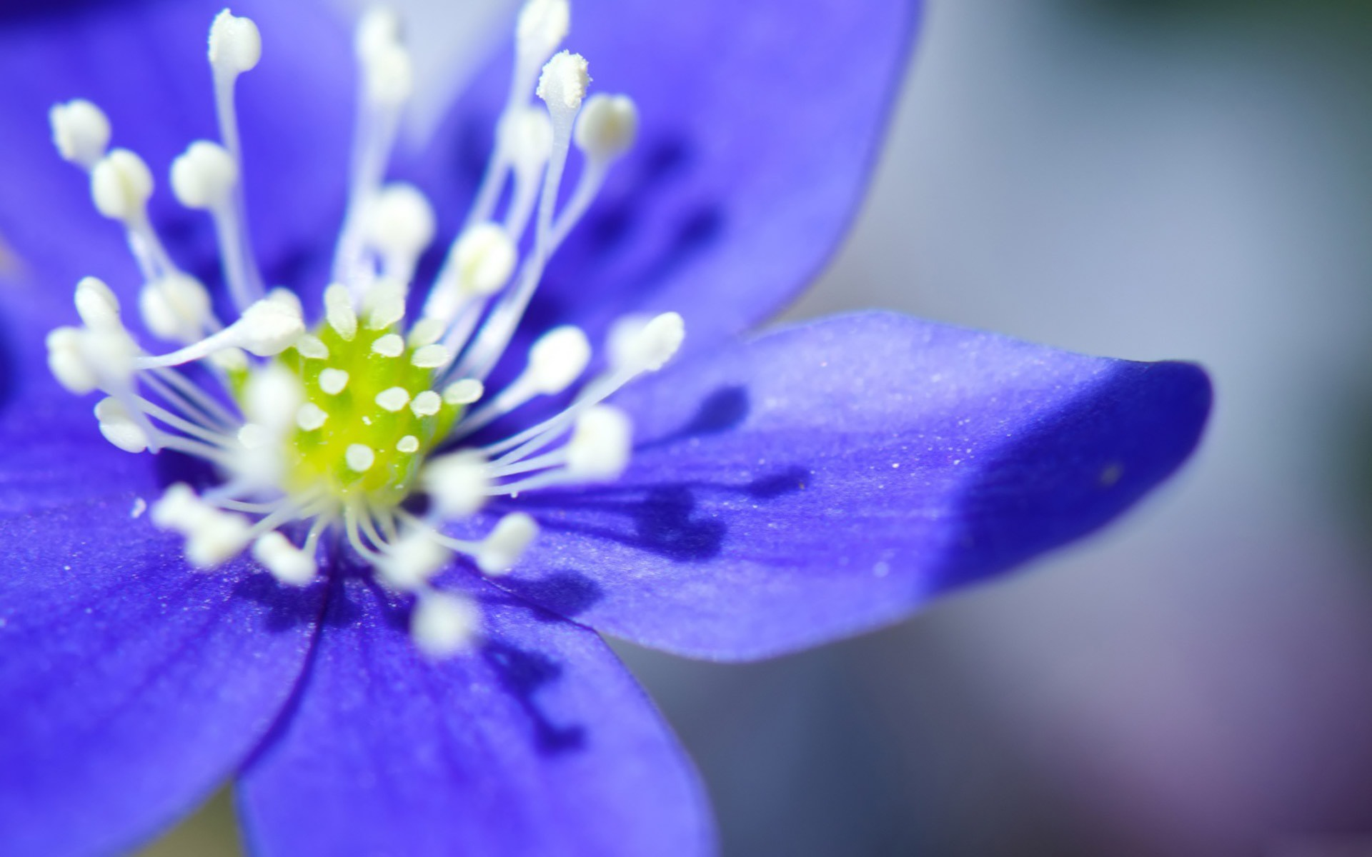 Purple Flower Desktop