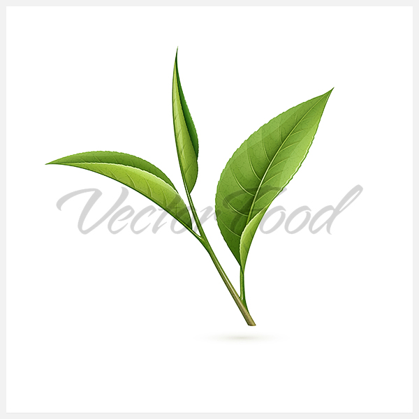 16 Leaves Tea Vector Images - Tea Leaf Vector, Green Tea ...
