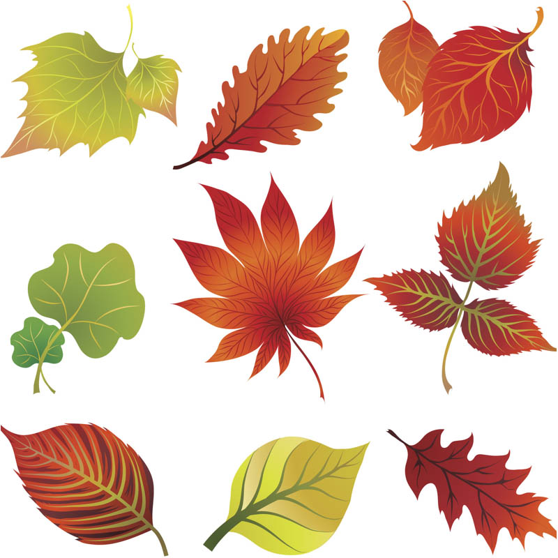 17 Free Vector Fall Leave Clip Art Images