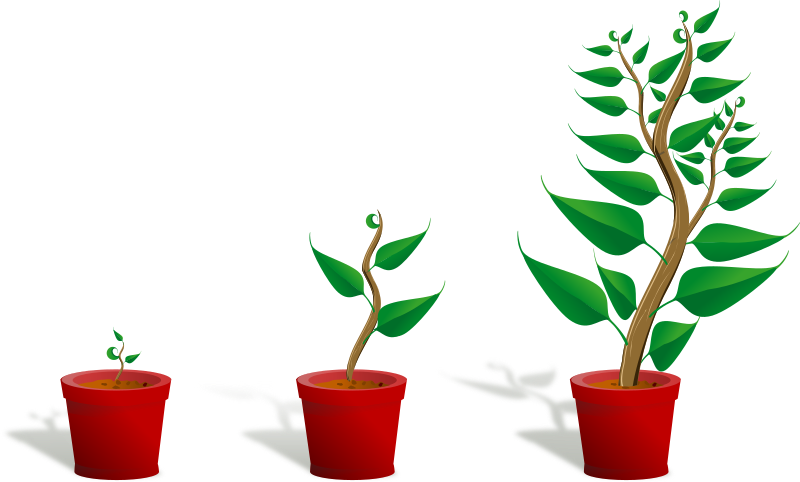 11 Growing Plant Icon Images