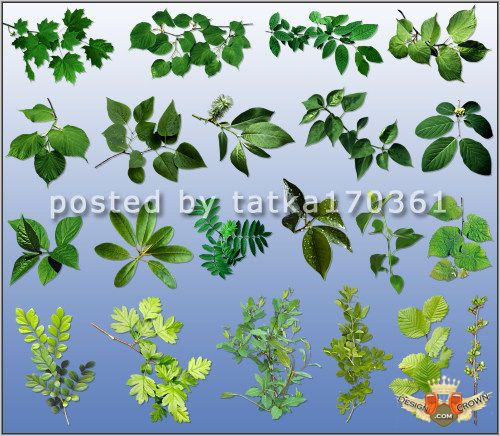 300 Dpi High Resolution Trees