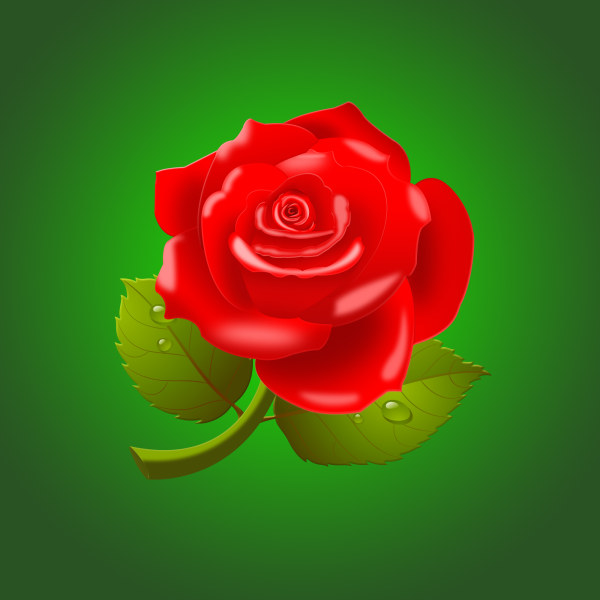 Beautiful Red Roses PSD