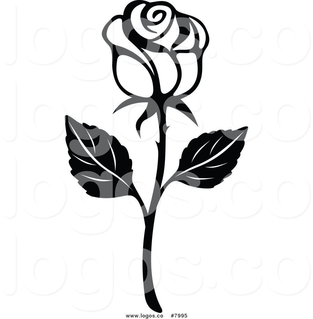 14 White Rose Graphics Free Vector Images