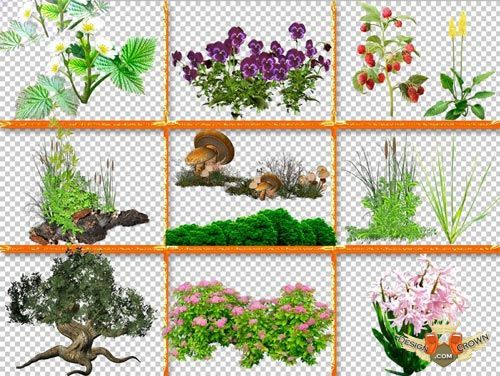 Green Plants with Transparent Background