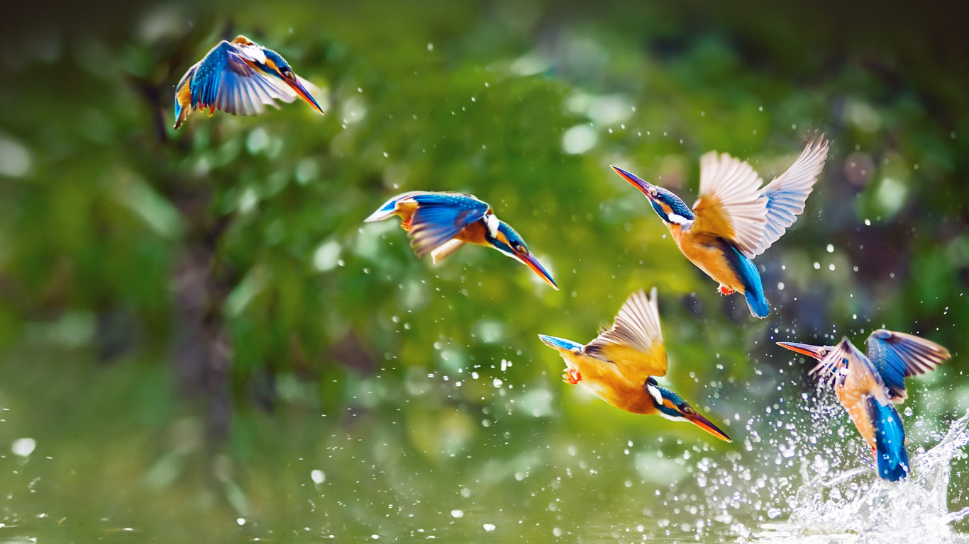 Kingfisher Bird Images Bing