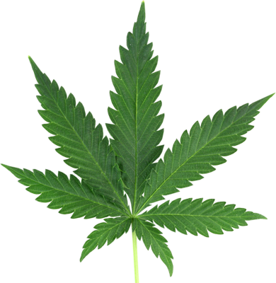 Marijuana Leaf Graphics