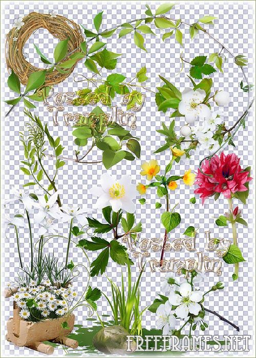 Photoshop Transparent Spring Flowers