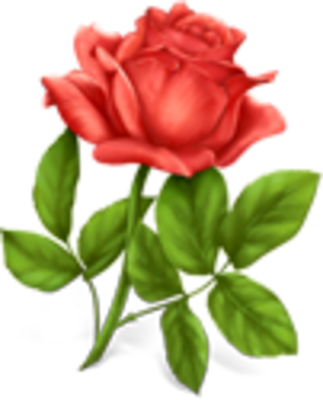 6 Red Rose PSD Images