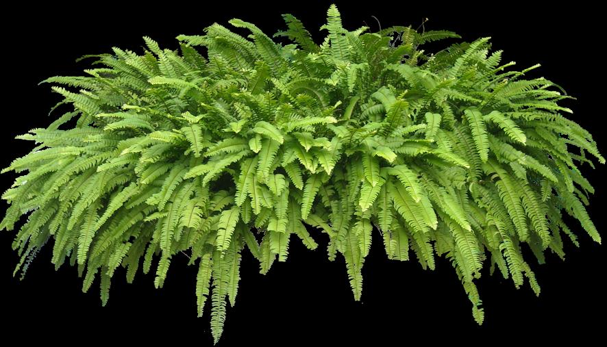 15 photoshop transparent herbs images photoshop - Decoration de grand vase transparent ...