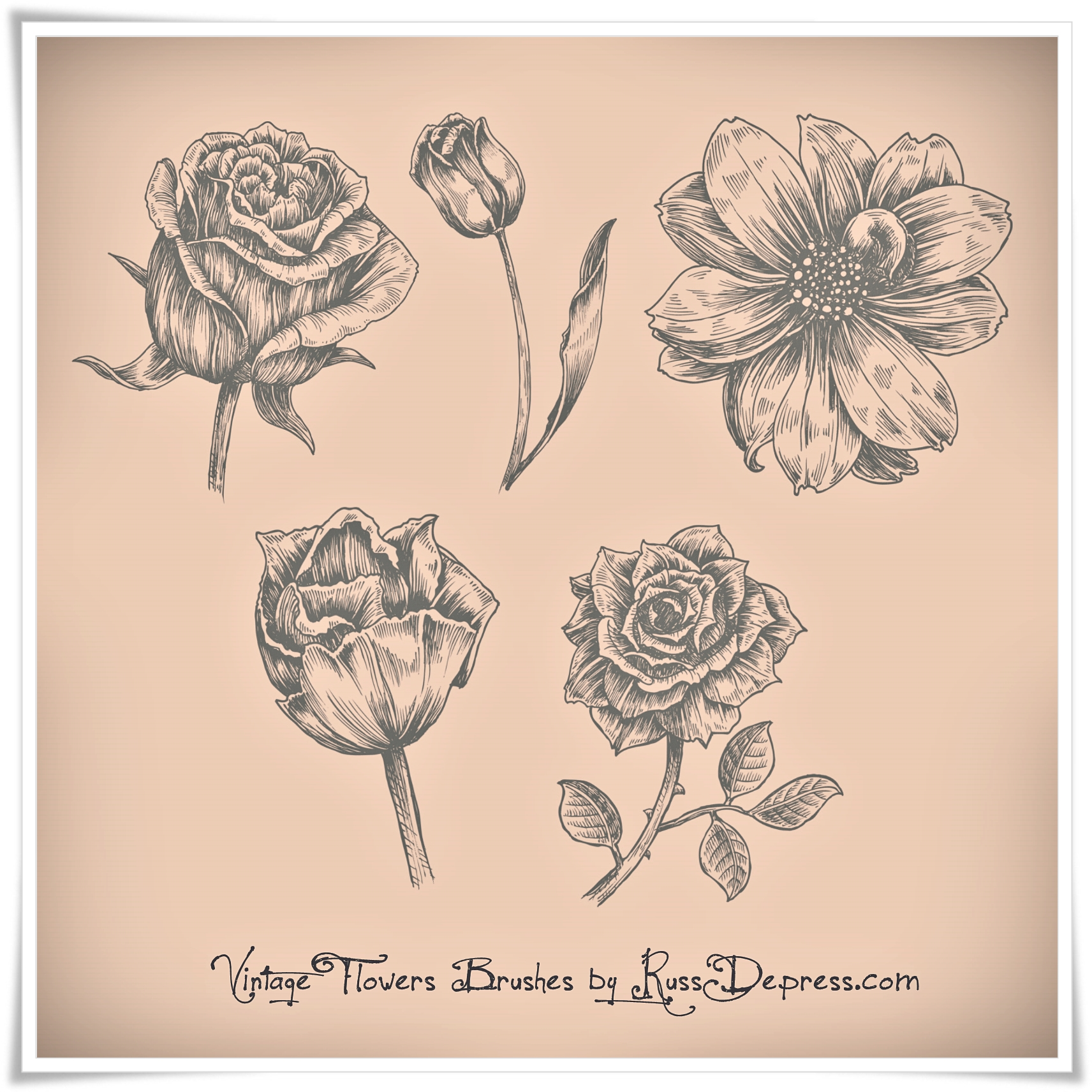 12 Vintage Flower Photoshop Brushes Images