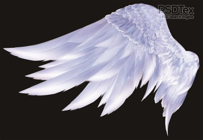 18 Angel Wings Side PSD Images