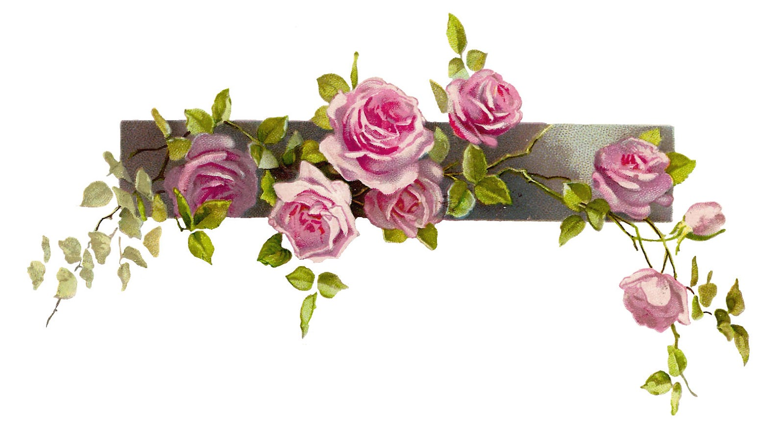 Free Clip Art Pink Roses Flowers