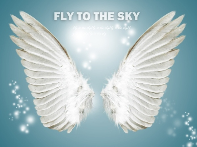 angel wings psd - photo #17