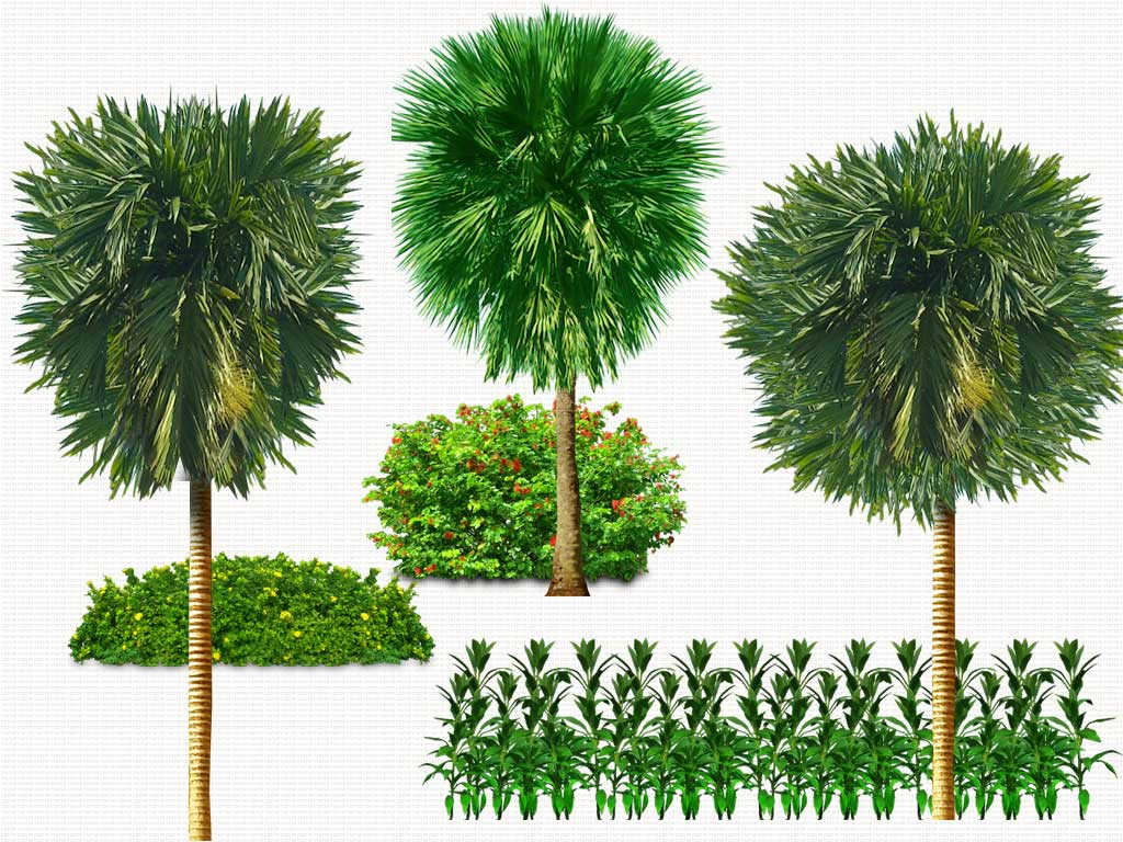 13 plants in plan psd free download images photoshop transparent trees photoshop trees plan - Tree images free download ...