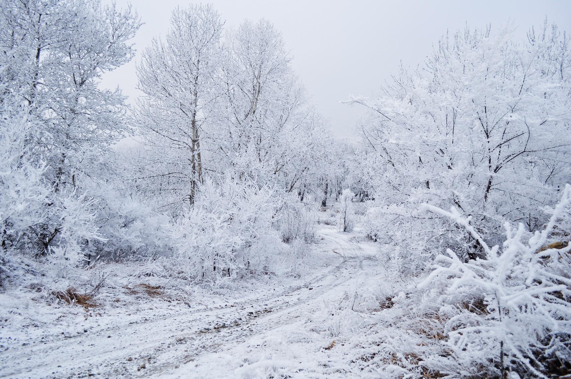 Public-Domain Images Snow Trees