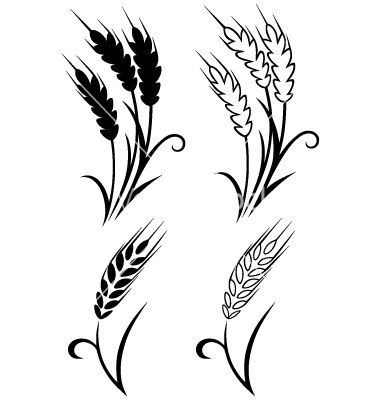 8 Wheat Stalk Vector Images