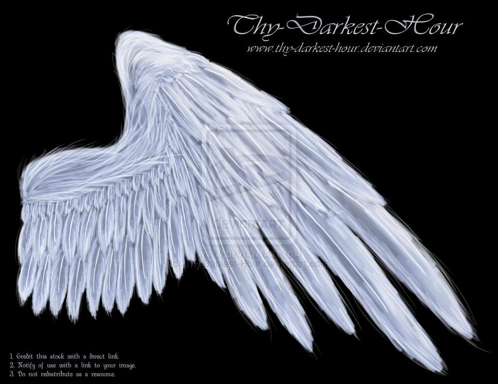 angel wings psd - photo #18