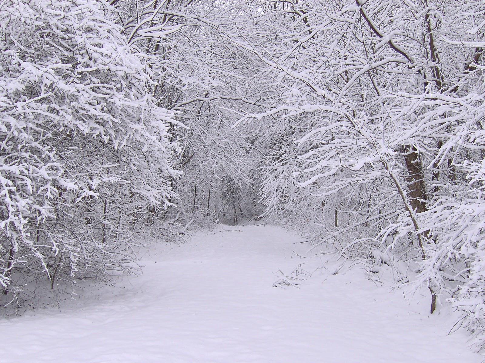 Winter Snow Scenes for Desktop Background