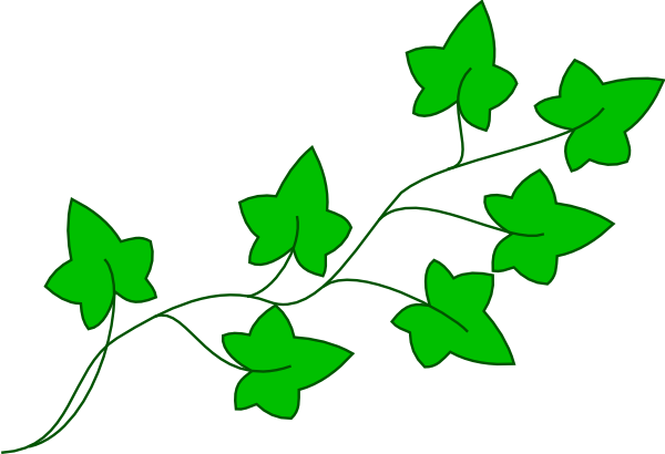 13 Ivy Vine Vector Art Images