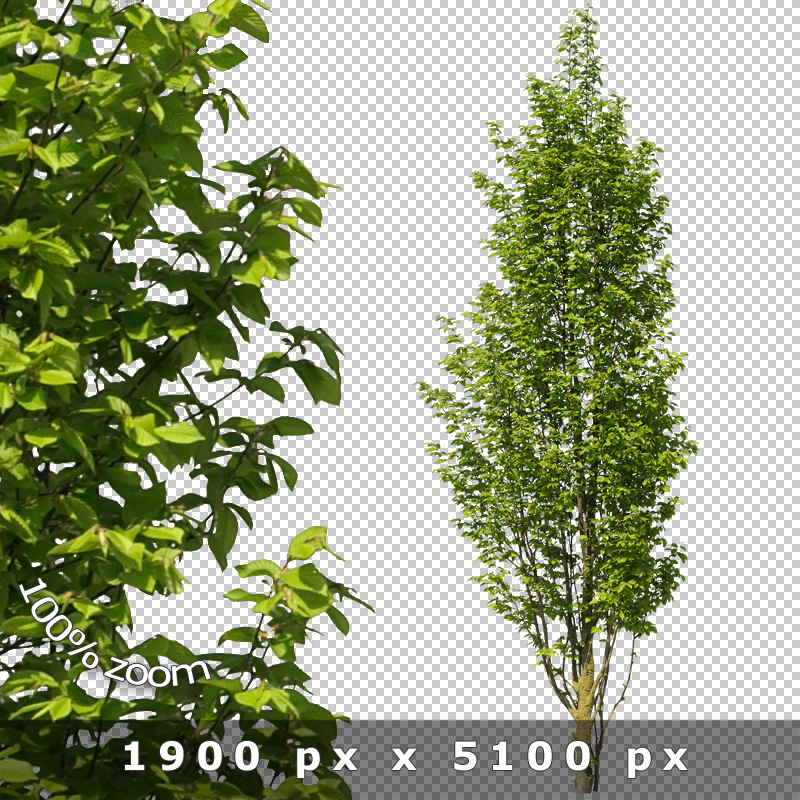 Photoshop Tree Cutout