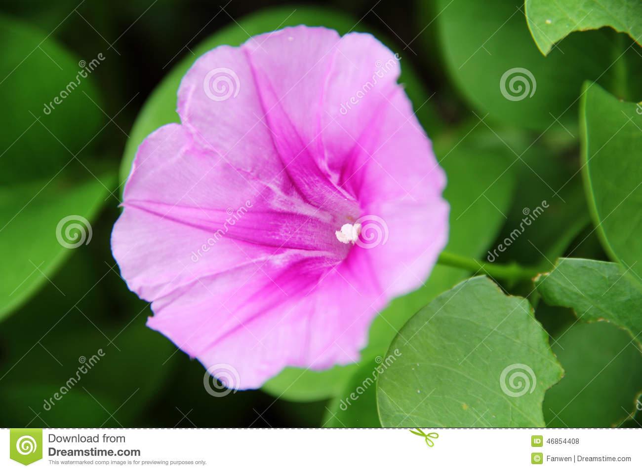 Simple Natural Beautiful Flowers