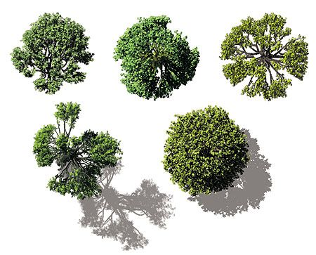 Architectural Trees Birds Eye View on How To Draw Shadows In A Floor Plan
