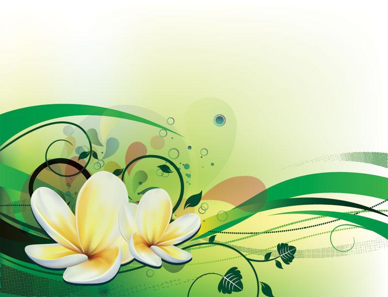 9 Plumeria Frangipani Vector Images